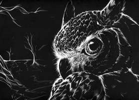 Scratchboard Owl by loverofscythe