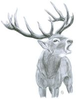 Bellowing Stag by LeeDassin