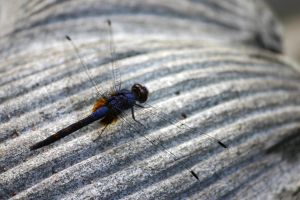 Dragon Fly by Santy79
