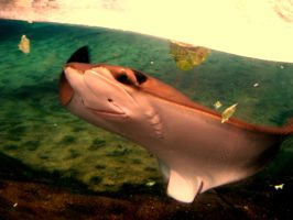 Stingray Smile by xHermionexxxGrangerx