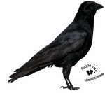 Cut-out stock PNG 21 - lovely crow by Momotte2stocks