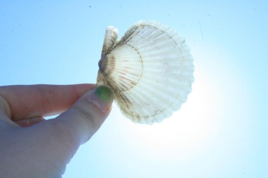 Sunkissed shell 2 by stixandstonz661