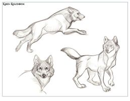 Wolf Sketches by kayjkay