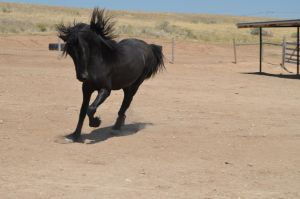 Prancing about by Misc-Photography