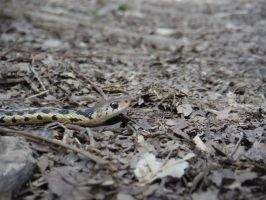 First Snake of the Year by Daggett-Walfas