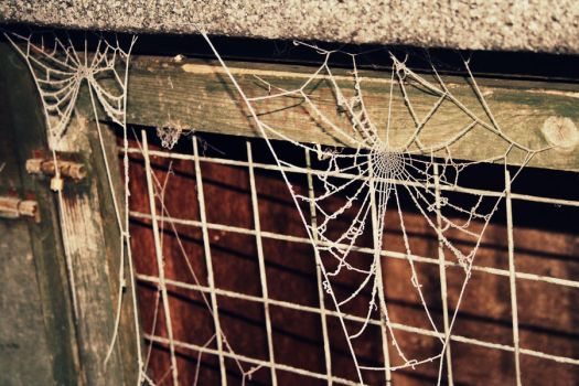 Glass Web by Just-Ally