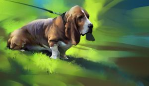 Basset Hound - Photo Study by KhoaSV