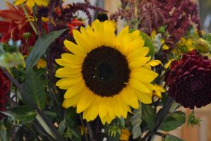 Sunflower (No Filter) by Singing-Wolf-12