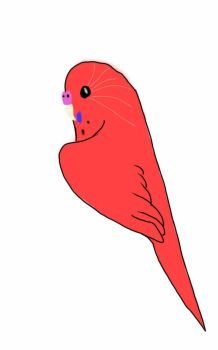 CLOSED Red Budgie adoptable by ParakeetTheIceWing