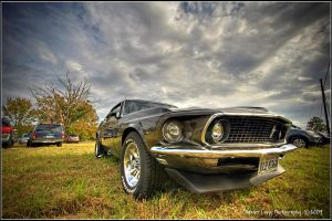 Stang by fizzle017