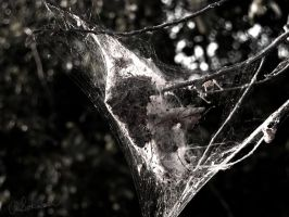 Metamorphosis Web by sokolovic1987