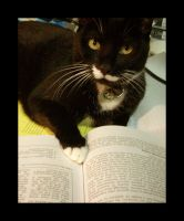 Cat- reading by Beautelle