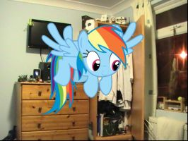 Why Is Dashie In My Room? by ThunderrDash