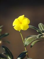 single yellow by mohaganbev