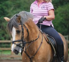 Palomino Welsh 1 by equinestudios
