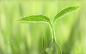 Spring Budding by vv-amarantine