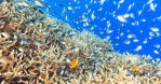 Coral reef panorama by MotHaiBaPhoto