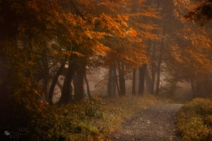 Where is the Red Riding Hood? by ildiko-neer