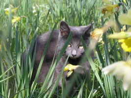 Sage Among The Daffodils 5 by thetamar