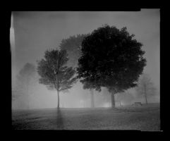 Fog and trees by photozz