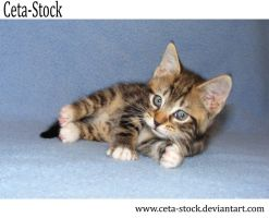 Kitten 18 by Ceta-Stock