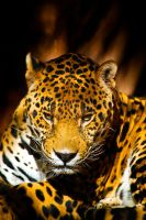 20071104-0049 Jaguar by Yellowstoned
