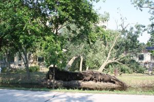 storm damage pic by munkfeavor76