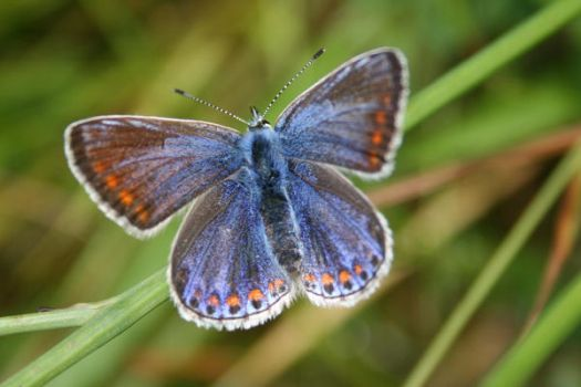butterfly by pirouel