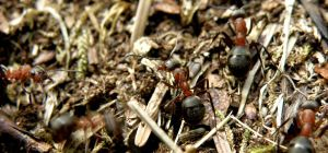 Right Ant Left Ant by ZeTrystan