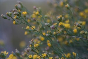 Unfocused by bowtiephotography