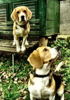 About other interest by marklarka