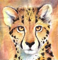 Cheetah portrait by Henrieke