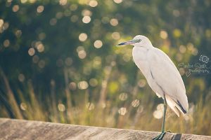 Egret Perch by CandiceSmithPhoto