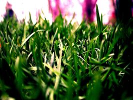 Head in the grass II by mimilie