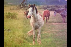 Camelo, the horse. by luxuriouss