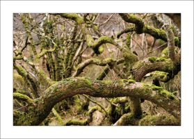 Twisted and mossy by Rajmund67