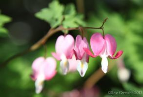 Openhearted by Passion4Photos