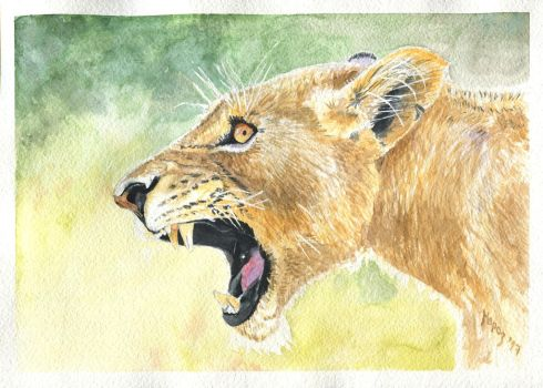Snarling lioness by dimasbka
