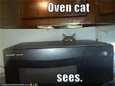 Oven Cat. by morgans20