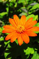 orange flower by abbyabbyabby58