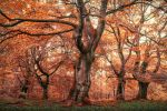 The Blood Grove by erynlasgalenphotoart