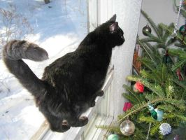 Discovering the Christmas Tree by JocelyneR