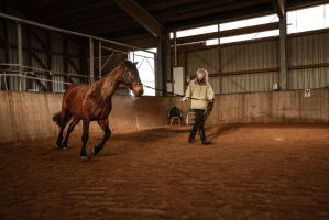 Everyday Stock - Lunging Indoors by LuDa-Stock