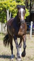 STOCK - 2014 Sep Tolly-71 by fillyrox
