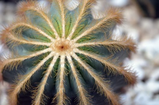 Cactus or Sea Anemone? by naomi-p