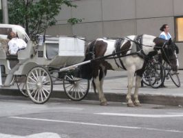Carriage Horse 1 by lee-mare