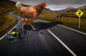 Why DID The Chicken Cross The Road? by zoinkscameron