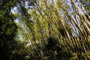 Bamboo forest by katiezstock