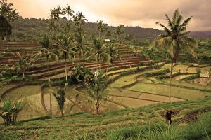rice terraces bali 11 by worldpitou