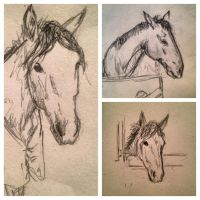 Horse sketches by R00-ha-ha